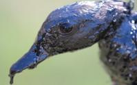 Oil Spill in Arkansas