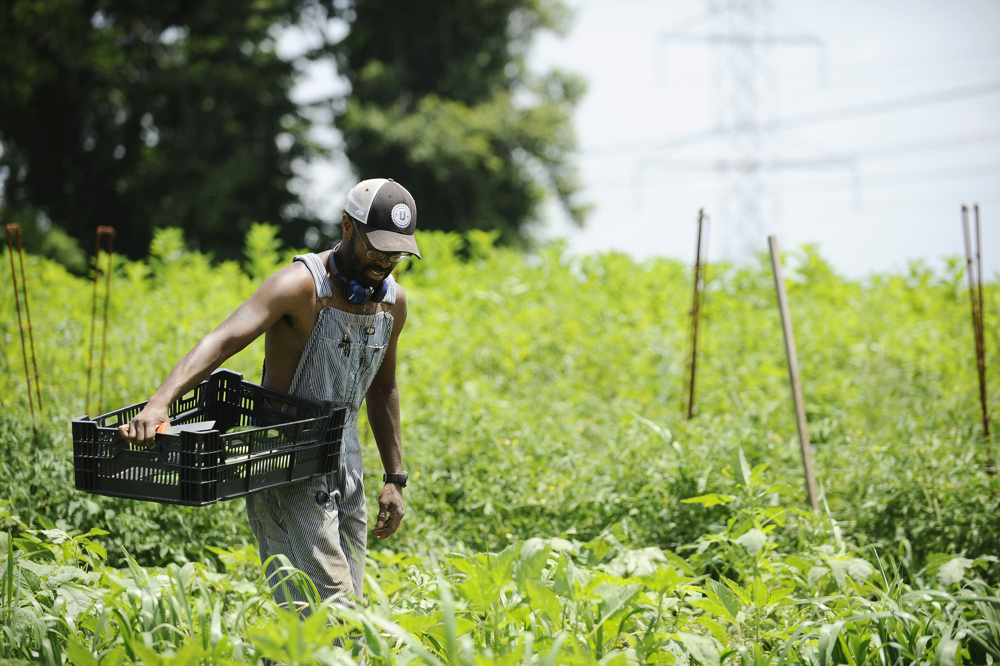 "Baltimore, MD -7/2/14- Denzel Mitchell, of Baltimore, harvests for cucumbers Wednesday afternoon. Mitchell owns operates his farm, ""Five Seeds Farm"" and provides it's vegetables to local Baltimore restaurants. Rachel Woolf/Baltimore Sun -- #7308"