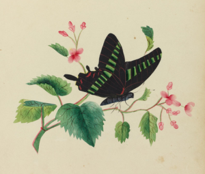 Flower painted by abolitionist Sarah Mapps Douglas