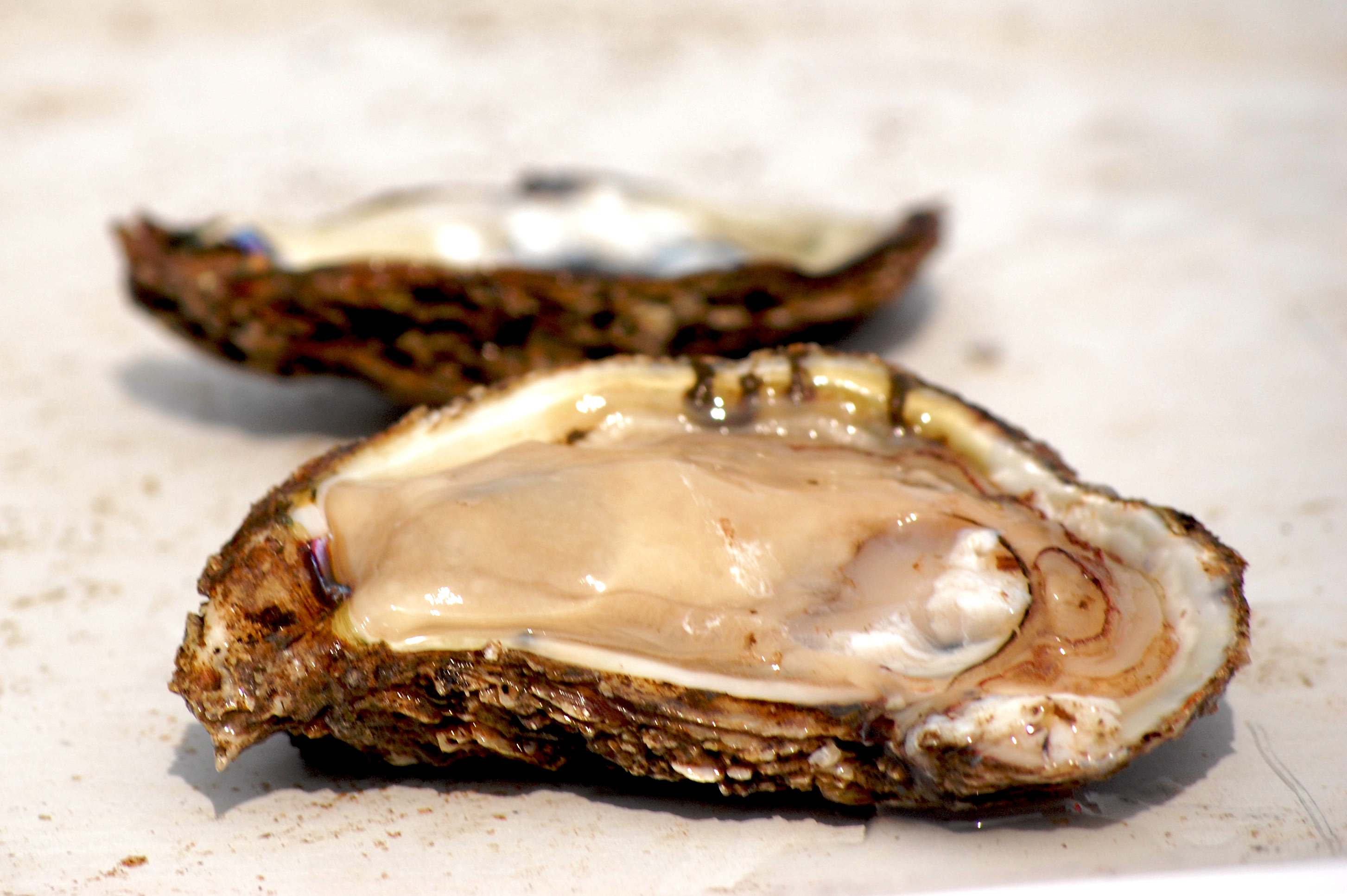Oysters, Photo Credit: chesbayprogram via Compfight