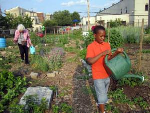 Urban Farm (Credit: Grid Philly)