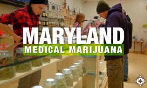 Medical Marijuana (Credit: MedicalJane.com)